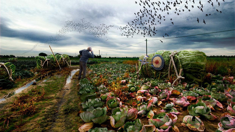 Digital Art: surreale Montage von Kohlrouladen auf einem verrottetem Kohlfeld. Ein alter Mann schaut in den Himmel hinauf zu tausenden in Schwärmen fliegenden Fledermäusen. Fotografie lässt Fiktion zur Wirklichkeit werden und erlaubt die künstlerische Umsetzung ohne Grenzen.